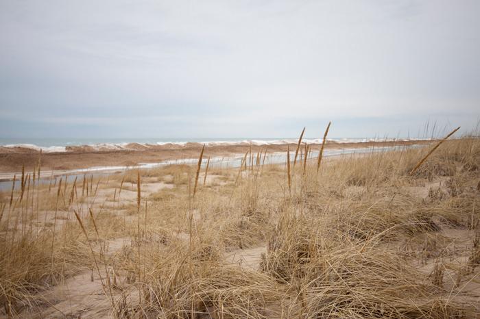 dunes-wheat-700